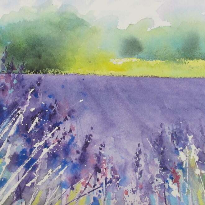 Chris Lockwood - Field of Lavender 2 by Chris Lockwood