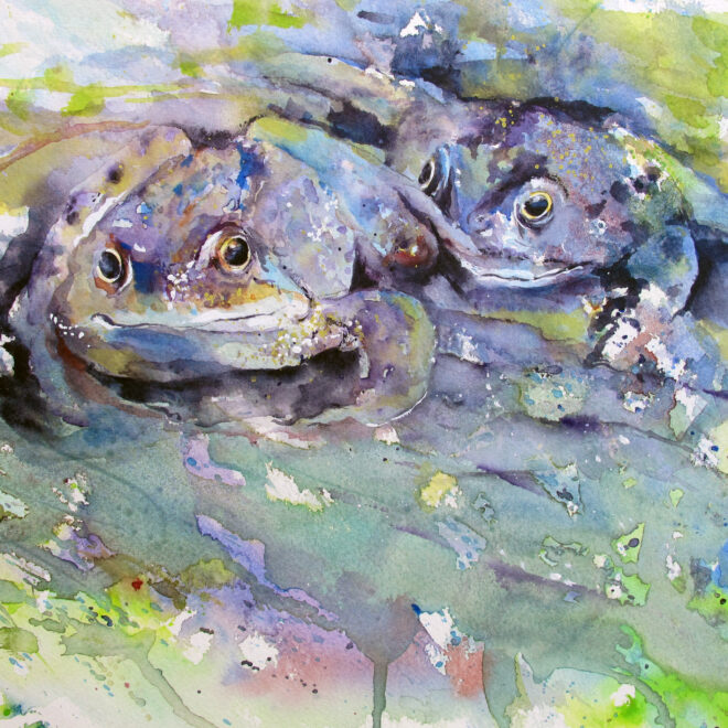 Frogs by Chris Lockwood