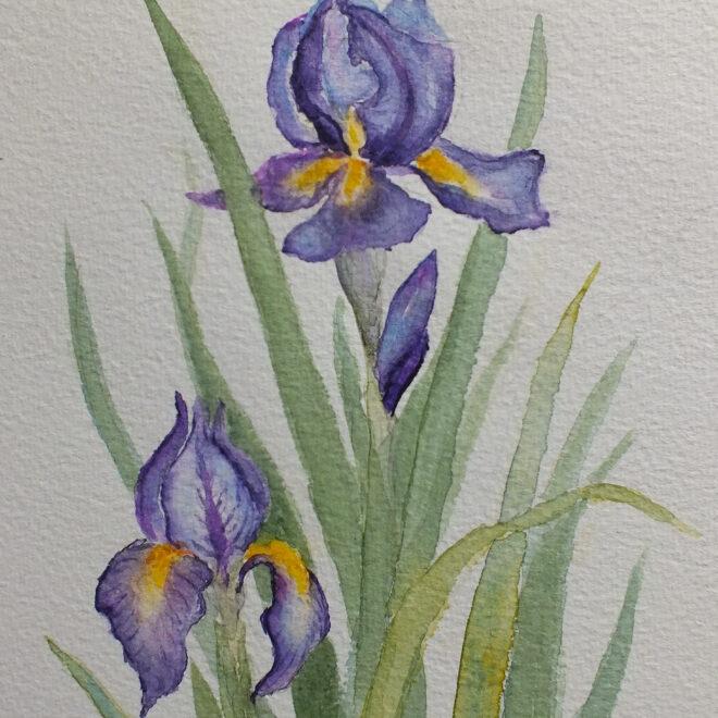 Iris at Woolpit by Maggie Scott
