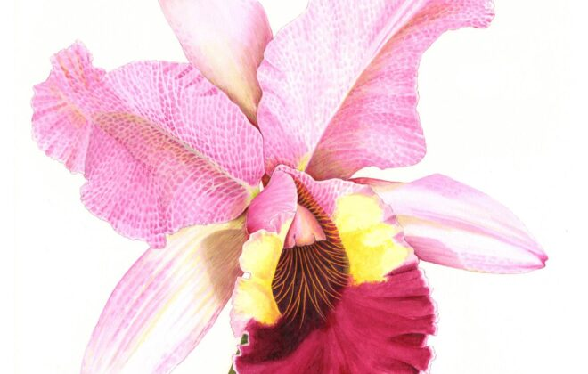 The Brush Award: Cattleya Ochid by Bridgette James