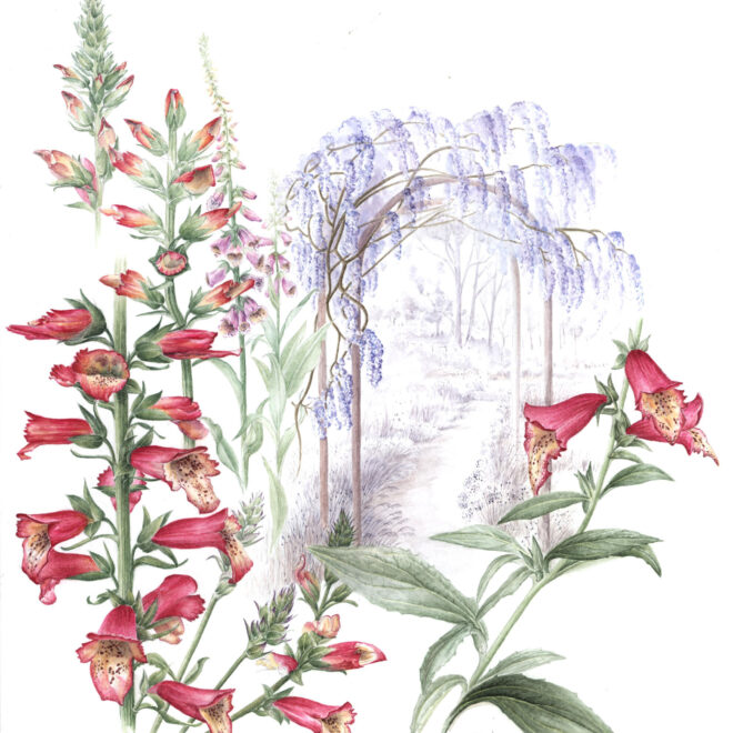 Foxglove-and-Wisterria-by-Hazel-Rush