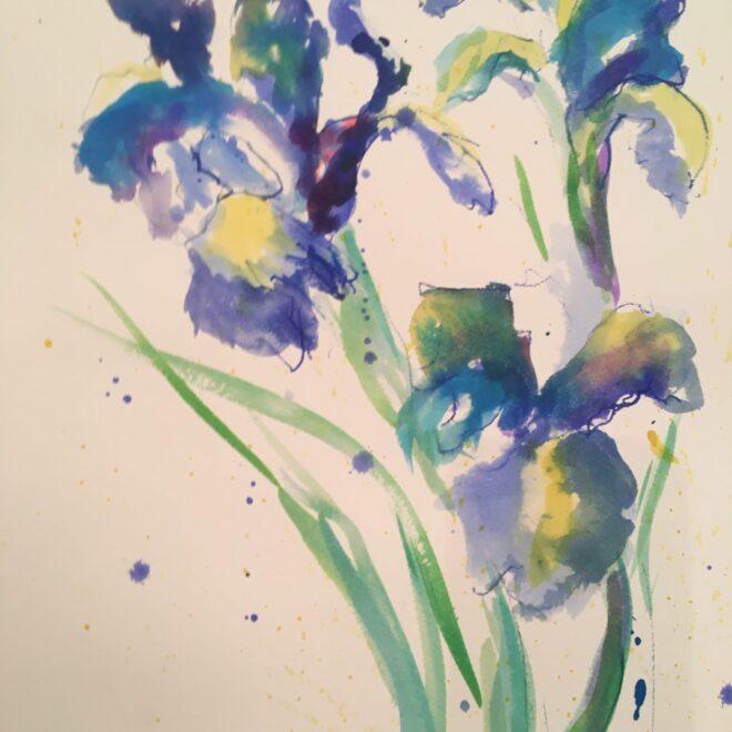Iris by Virginia Albutt