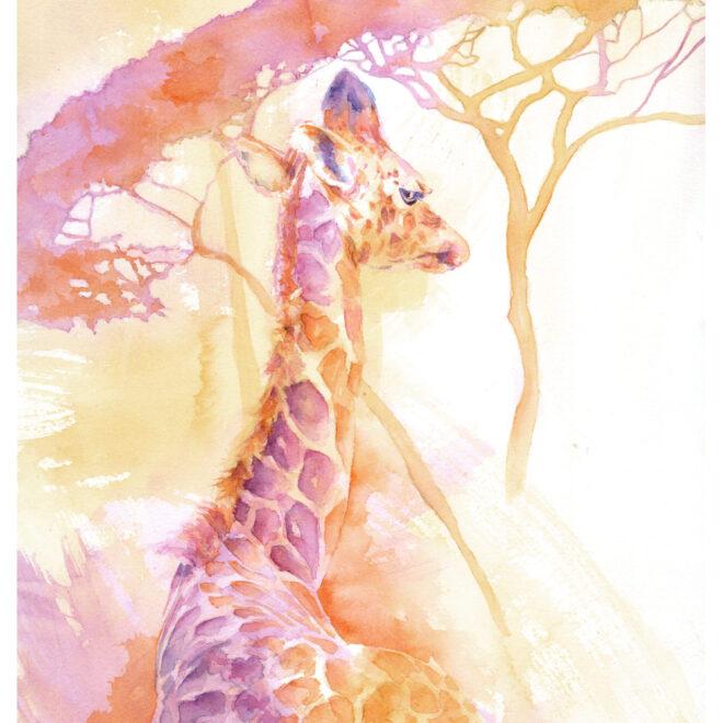 New born Giraffe