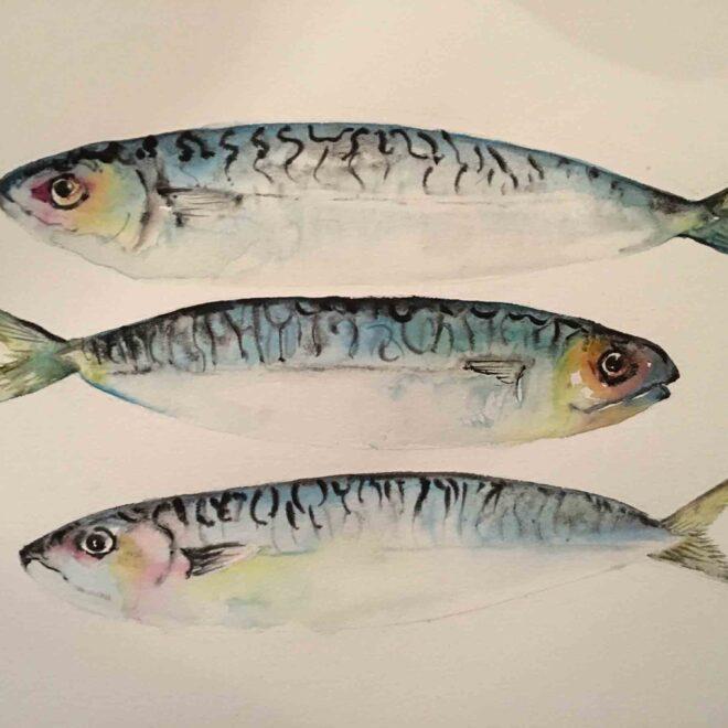 Norfolk-Mackerel-Helen-Clarke