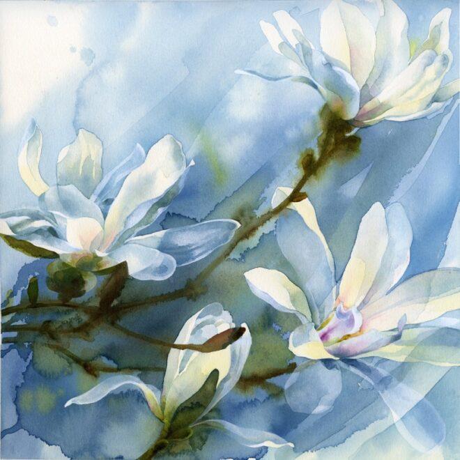 Magnolias by Petula Stone