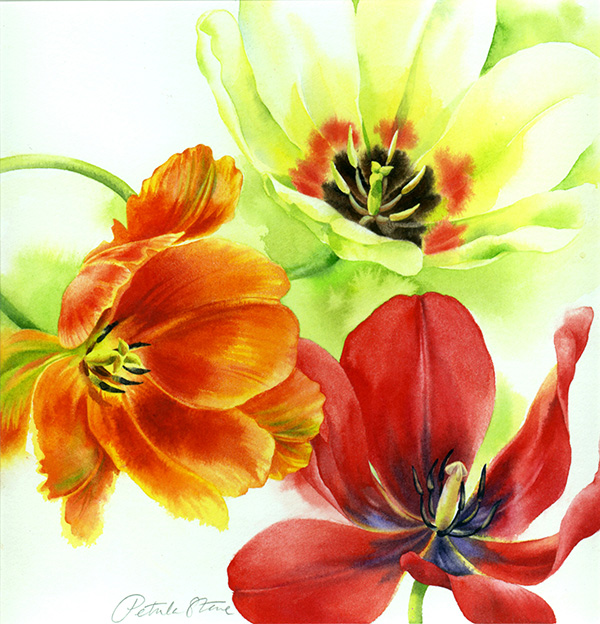 Three Tulips by Petula Stone