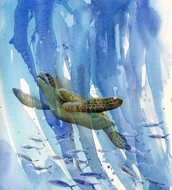 Turtle by Petula Stone