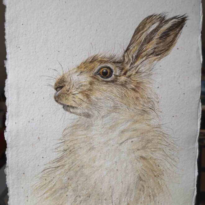 Hare-1-by-Jan-Couling