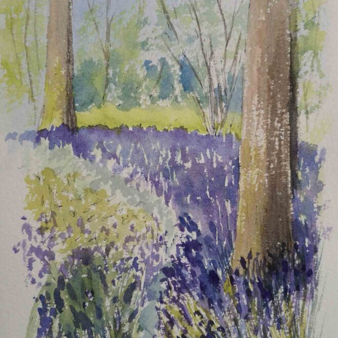 Bluebell-wood-near-Clare-by-Jan-Couling
