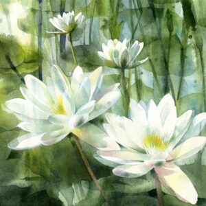 Petula Stone - Waterlilies