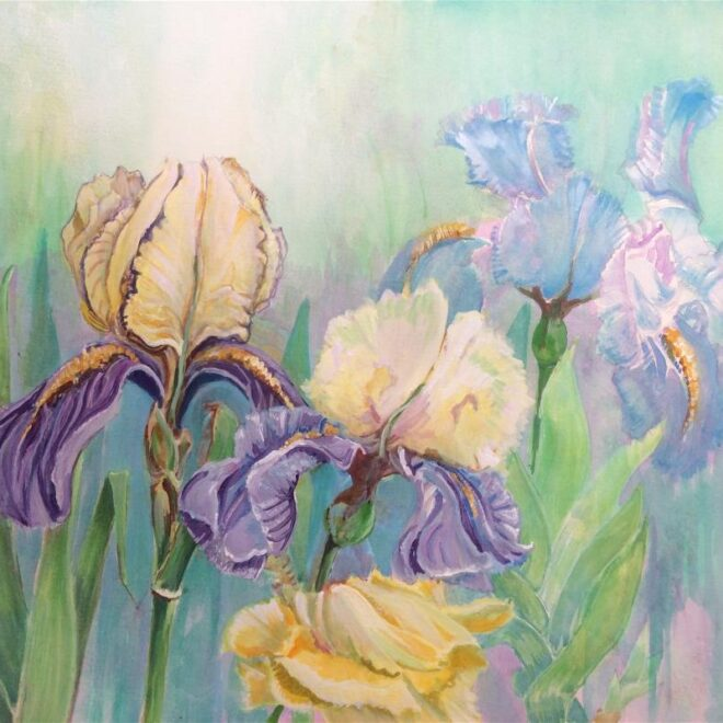 Joannie Sandford-Cook - Sunset Cottage Irises during lockdown
