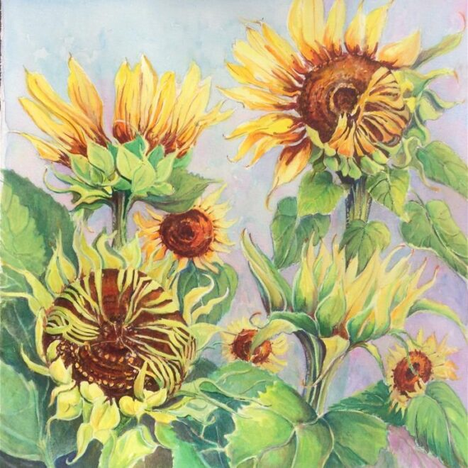 Joannie Sandford-Cook - Sunset Cottage sunflowers during lockdown