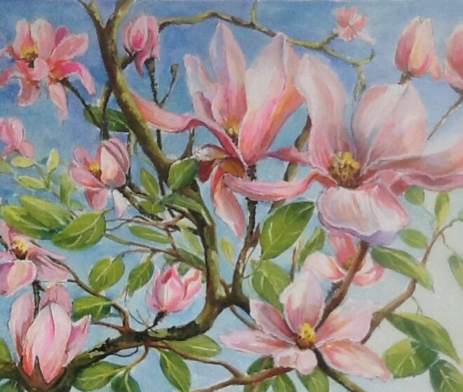 Magnolia tree in bloom by Joannie Sandford-Cook
